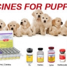 Vaccinating Your Pet